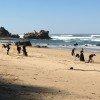 Beach-Cleanup-2