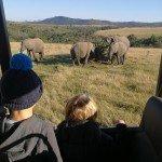 Oakhill Grade 1 African Safari Adventure (11)